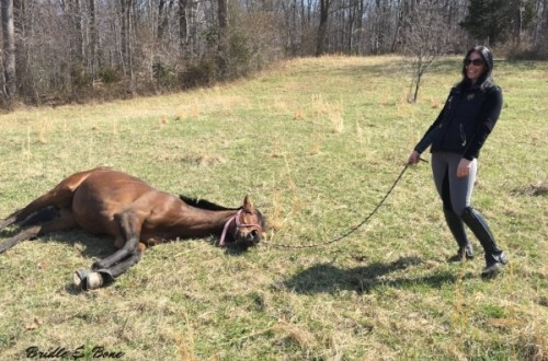 Even Thoroughbreds have Lazy Days