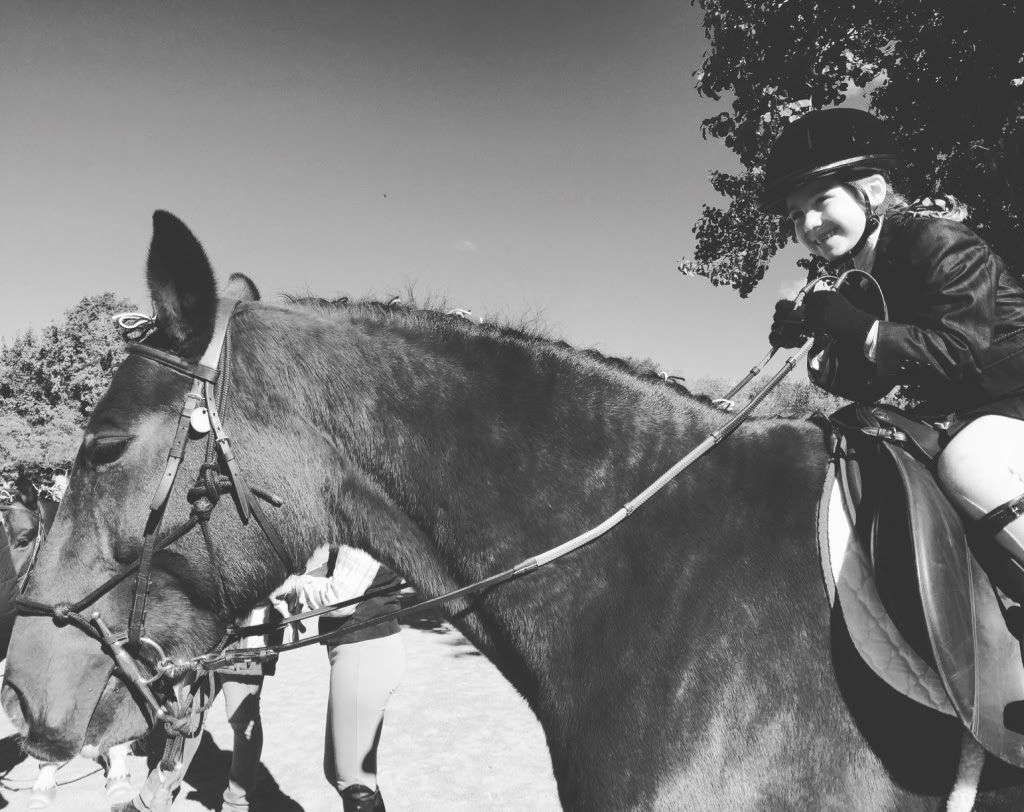Dramatic Highs and Lows of Horse Shows
