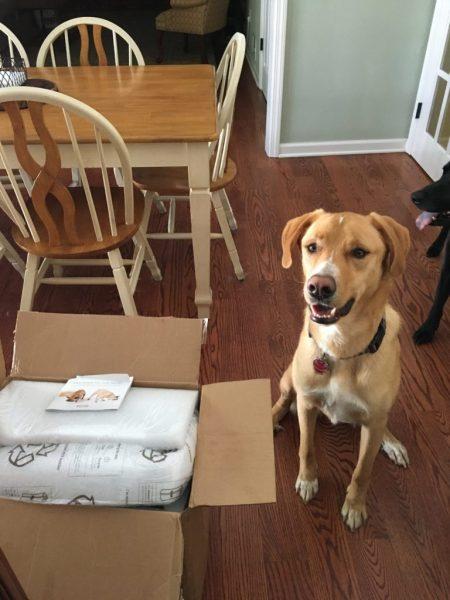 Fresh dog food delivered