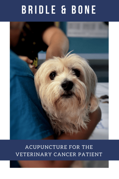 Acupuncture and the Veterinary Cancer Patient