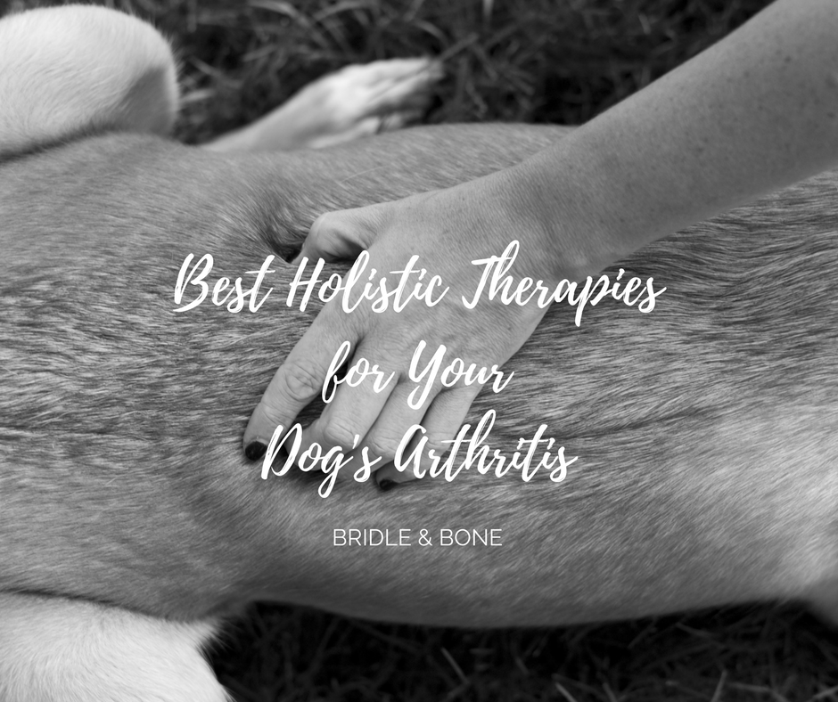 The Best Holistic Therapies for your Dog's Arthritis