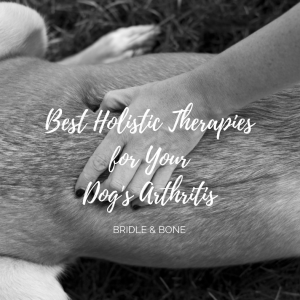 Holistic Therapy for Arthritis Dog