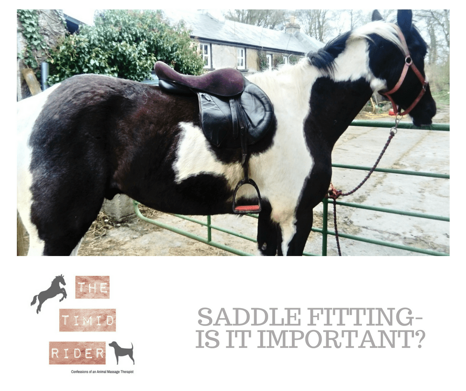 Saddle Fitting- Is It Important?