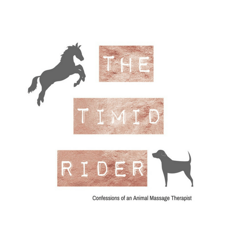 Introducing The Timid Rider