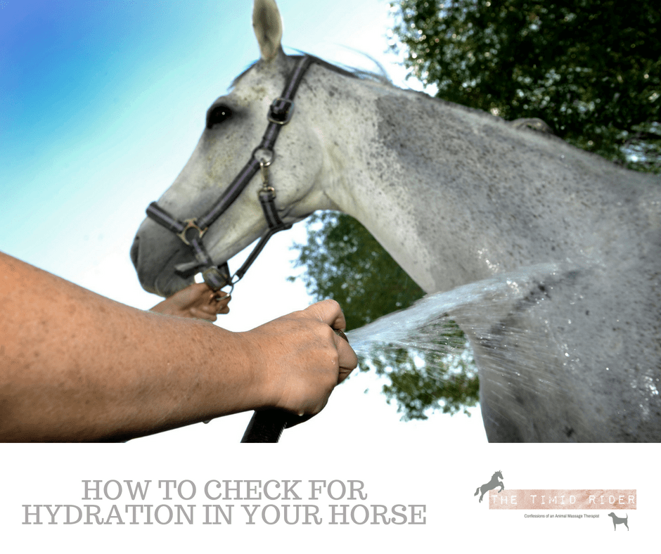 Guest Post: How to Check For Hydration In Your Horse