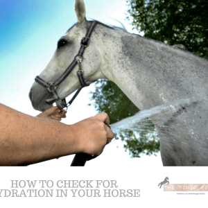 Horse Hydration