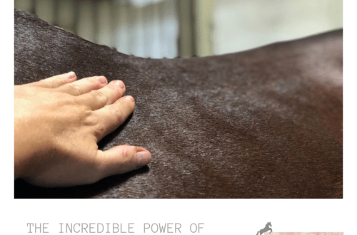 Incredible Power of Connection Horse