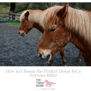 How to Choose the Perfect Horse for a Nervous Rider
