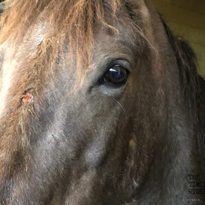 Horse Skin Condition