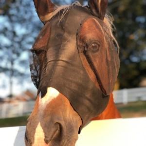 Horse Fly Mask