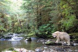Great Bear Rainforest IMAX and a chance to win