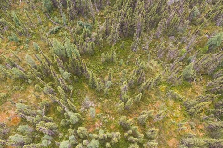 Aerial view of sparse forest of black spruce and tamarack.