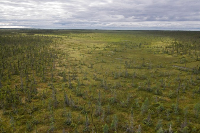 A woodland caribou trail weaves trough a bog in Ontario's Far north