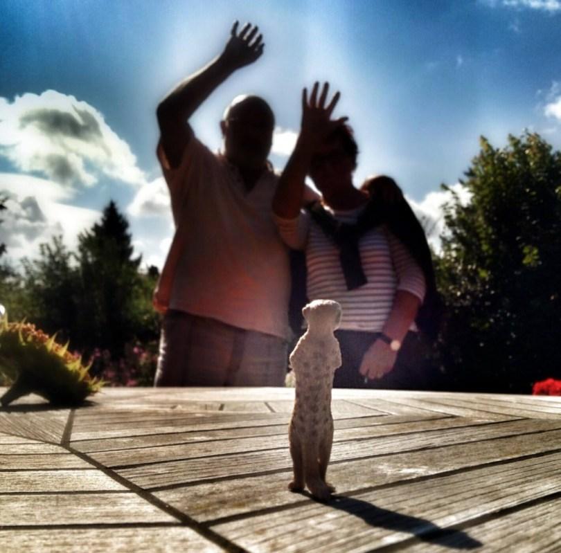 Erdmännchen und Eltern