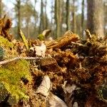 Bunte Waldfarben