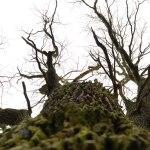 Blick in die Krone eines Baumes