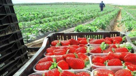 Asia, mercado con gran potencial para el agro michoacano: Sedrua