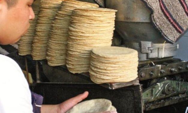 La tortilla podrá subir de precio y alcanzar hasta los $24.00 el kilo en este puerto de LZC