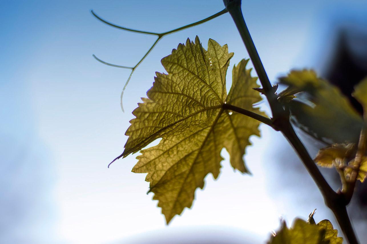 Un viaggio in Friuli Venezia Giulia con i vini Forchir