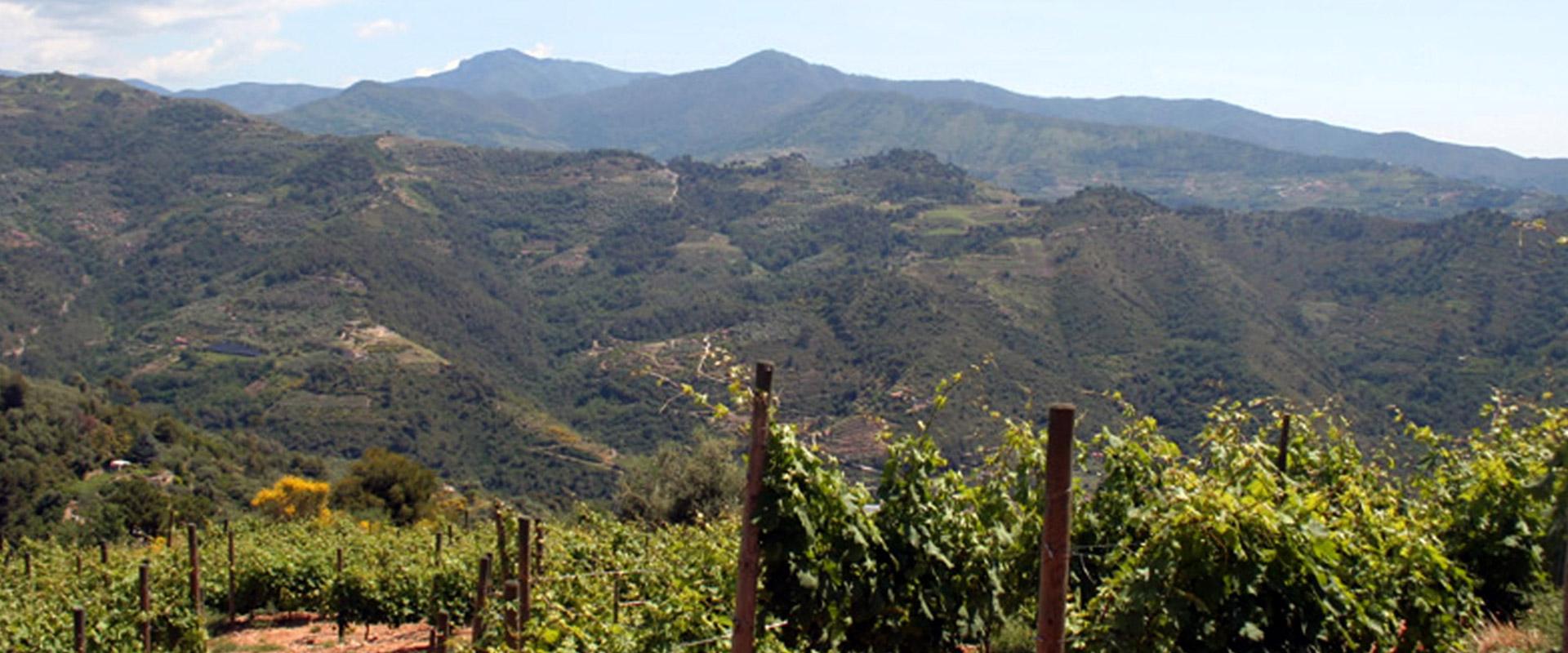 Tenuta Anfosso presenta Antea Origini: un vino dal sapore antico