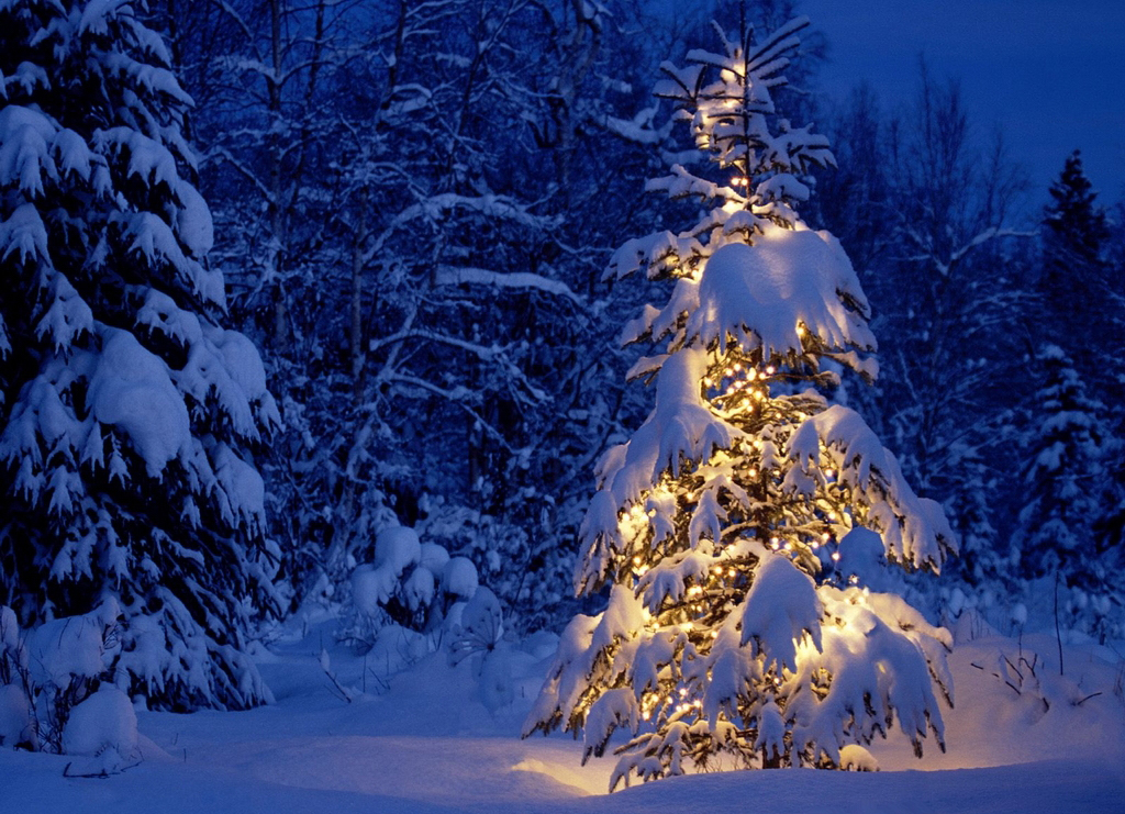 Beautiful Christmas tree at night with lights under snow