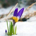spring-gardening-tasks227