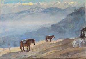 Marek Trek Ponies