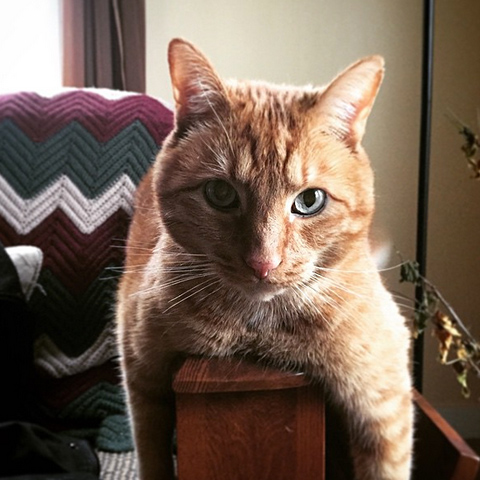 Tims awesome cat photo