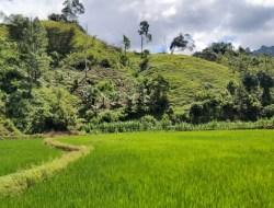 Apa Saja Hal Menarik Menekuni Profesi Bertani Sawah