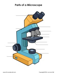 Unlabeled Microscope Image