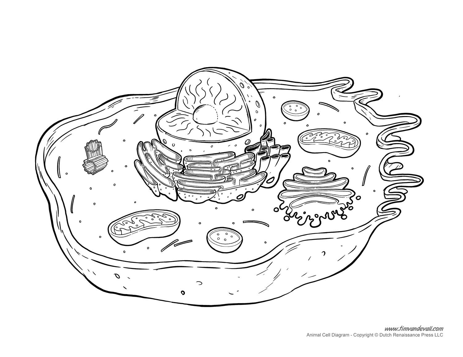 animal cell diagram labeled with functions 2006 toyota tundra radio wiring printable  unlabeled and blank