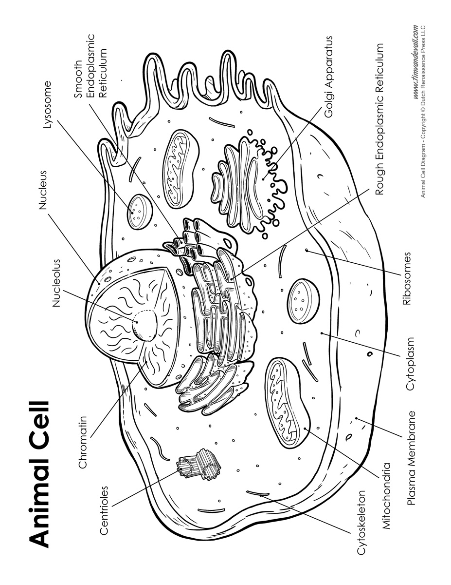 animal cell diagram labeled and functions 1981 kz1000 wiring label me free for you tim s printables game
