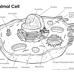 Animal Cell Coloring Diagram 120v Lighting Contactor Wiring Printable  Labeled Unlabeled And Blank