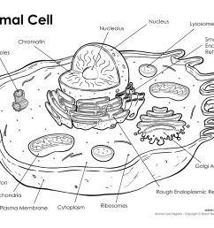 animal cell diagram [ 1500 x 1159 Pixel ]