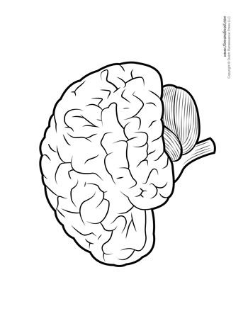 Blank Brain Diagram : blank, brain, diagram, Brain, Diagram, Blank, Tim's, Printables