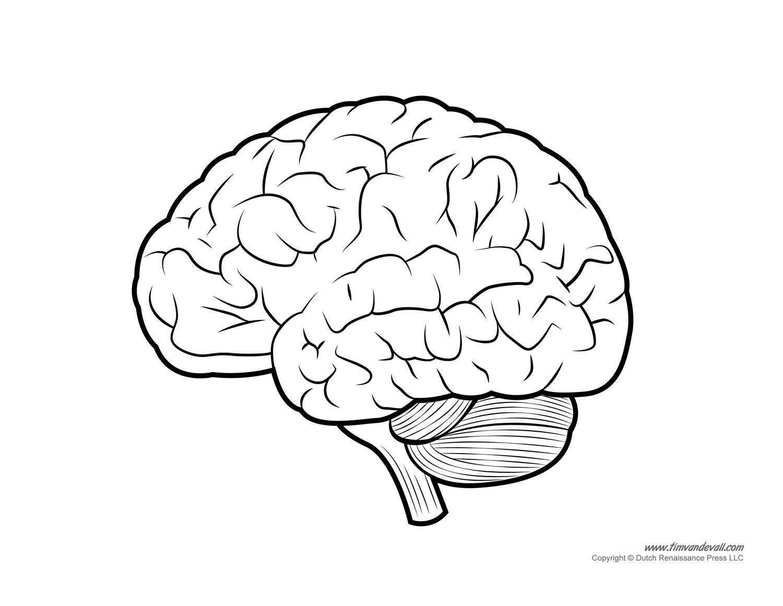 Diagram of Human Brain - Tim's Printables