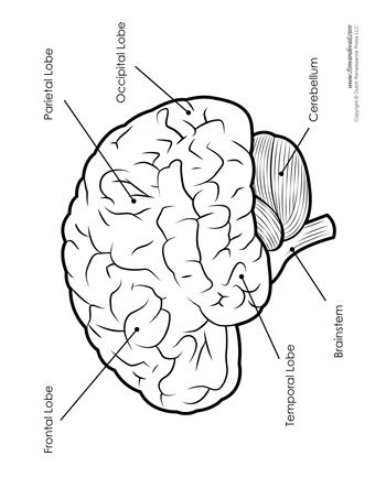 Labeled Brain