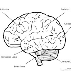 human brain diagram labeled unlabled and blank [ 1500 x 1161 Pixel ]