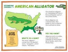 Alligator Facts for Kids - Where Do Alligators Live?