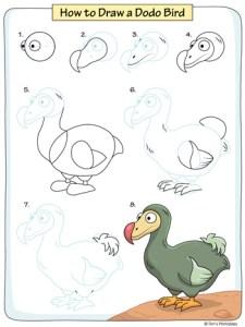 how to draw a dodo bird