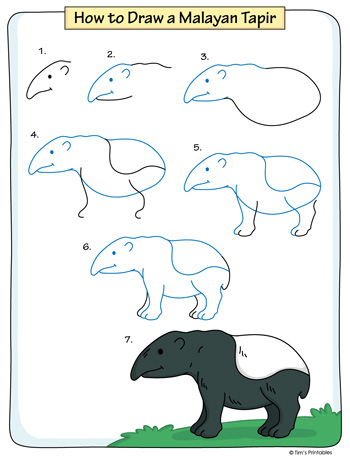 How to Draw a Malayan Tapir