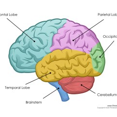 Frontal Brain Diagram No Labels Food Process Flow Symbols Human  Labeled Unlabled And Blank
