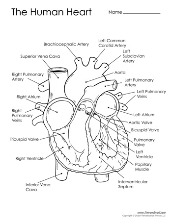 Nerdy image pertaining to printable heart diagram