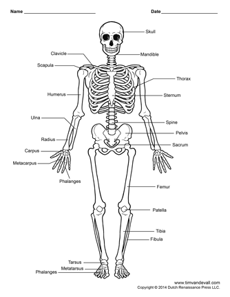 scapula diagram quiz russound volume control wiring printable human skeleton - labeled, unlabeled, and blank