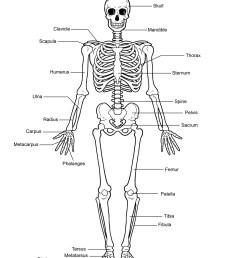 human skeleton diagram human skeleton labeled [ 1159 x 1500 Pixel ]