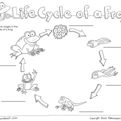 Sea Turtle Life Cycle Diagram Moen Shower Faucet Parts Printable Of A