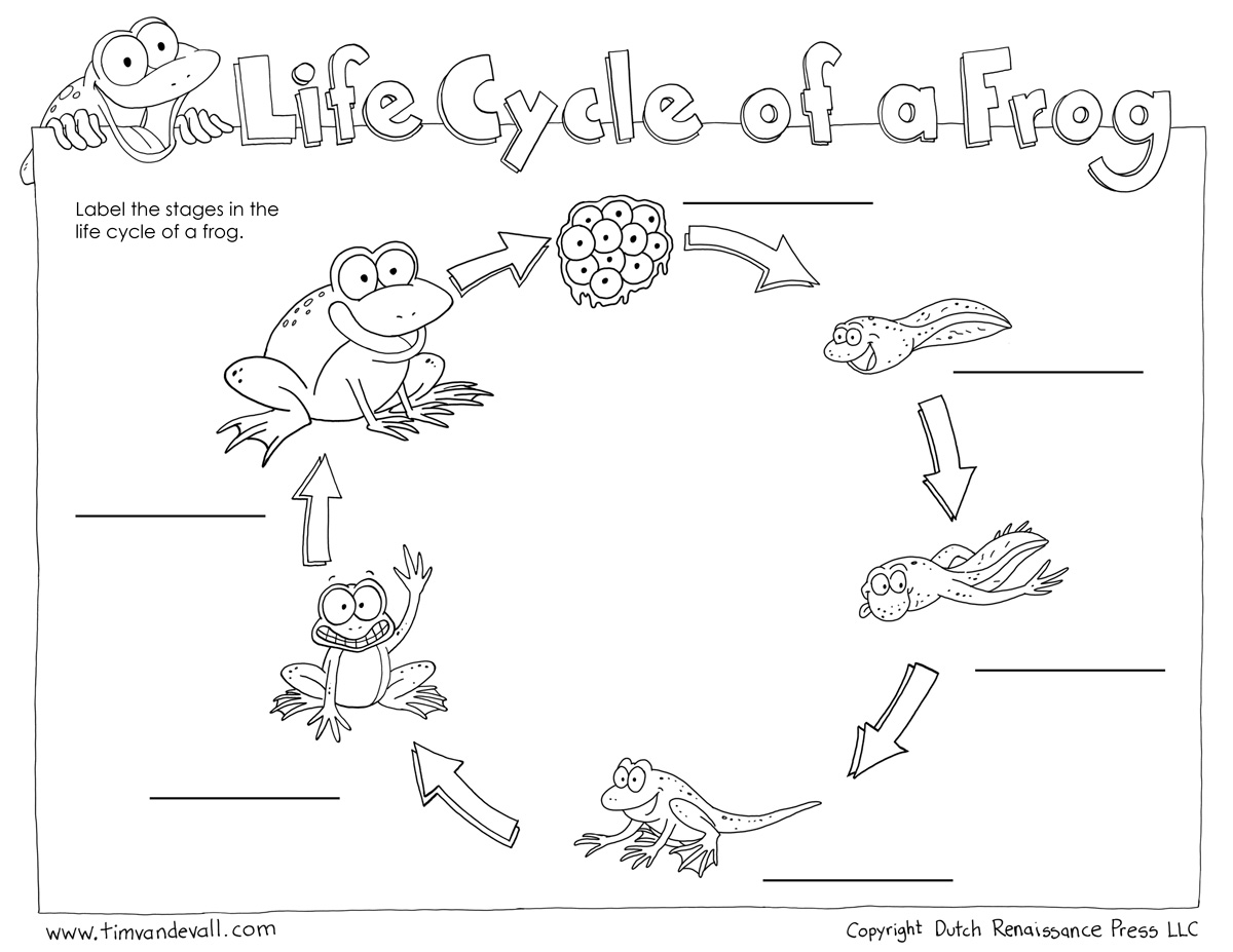 life-cycle-of-a-frog-blank-bw