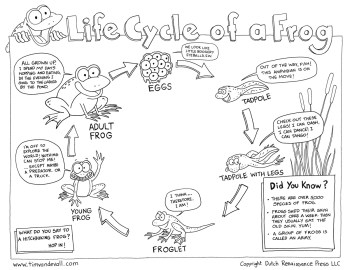 Striking image throughout life cycle of a frog printable