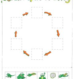Life Cycles Worksheets Third Grade   Printable Worksheets and Activities  for Teachers [ 1408 x 1088 Pixel ]