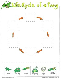 Frog Life Cycle For Kids Worksheet